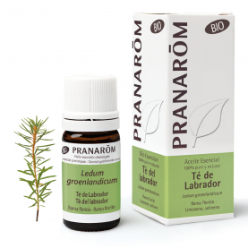 Tè del labrador - 5 ml | Pranarôm
